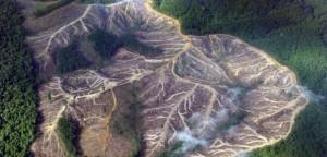 deforestazione-indonesia-0-960x460